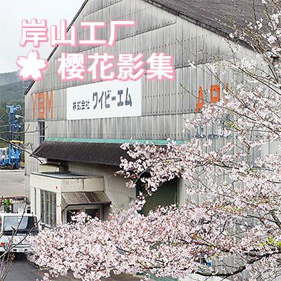 岸山工厂樱花影集