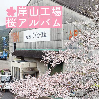 岸山工場桜アルバム